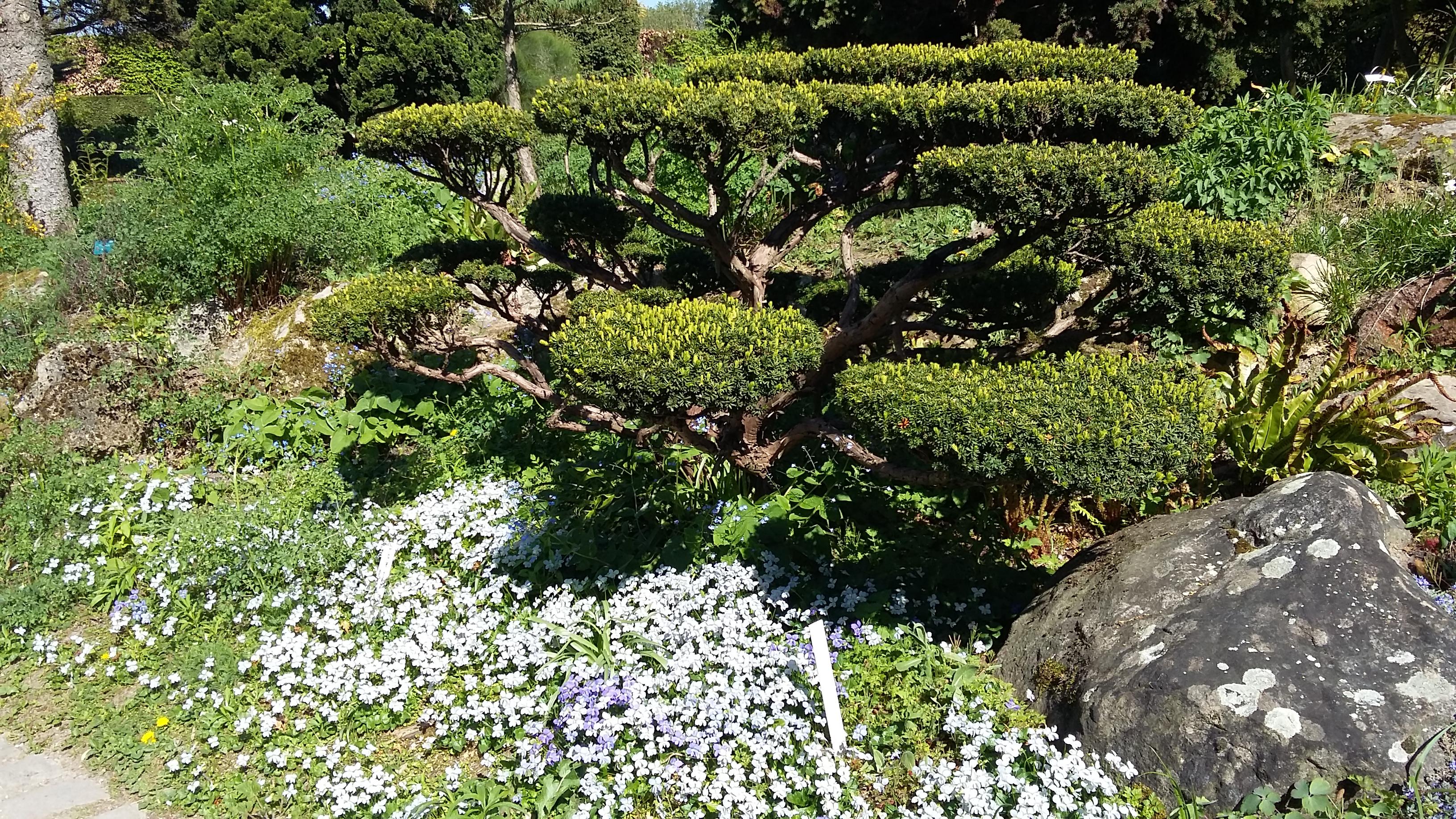 jardins de l école Du Breuil le jardin Japonais lacalobra