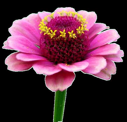 Tubes Fleurs - Divers