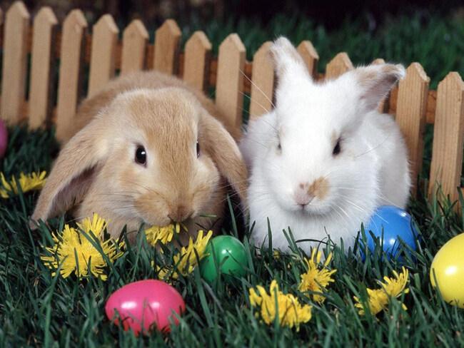 Belles Images de Pâques 6