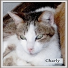 Chat charly