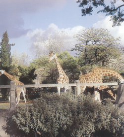 Le parc zoologique du bois de Vincennes