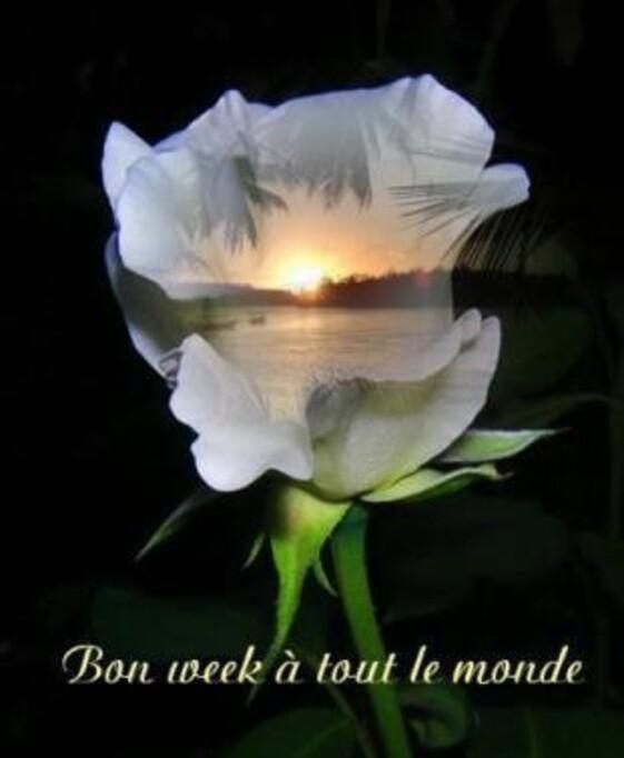 myemoticone_gif---de-semaine_belle_image.jpg