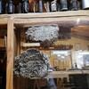Musée du miel photo mcmg janvier 2020