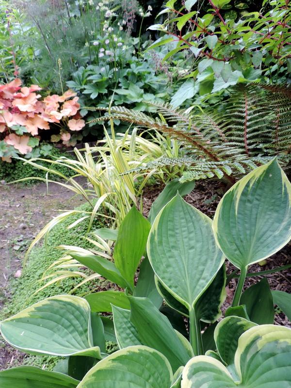 Plantes pour jardin d\'ombre... - Le Nouveau Blog de SHUKI