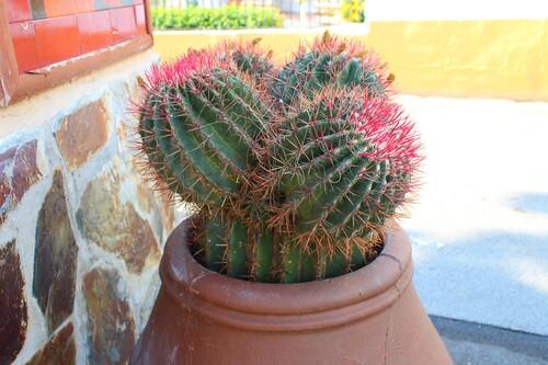 Cactus et plantes grasses 2