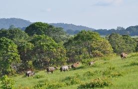 Parc national de la Lopé - Gabon