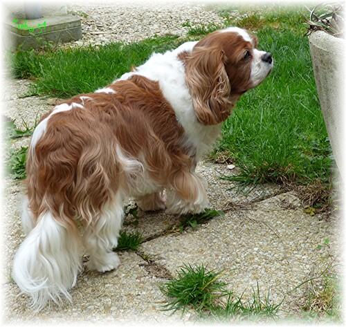 Inspection du jardin avec Edline