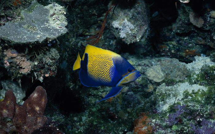 Les Habitants de l'Océan: 15 images