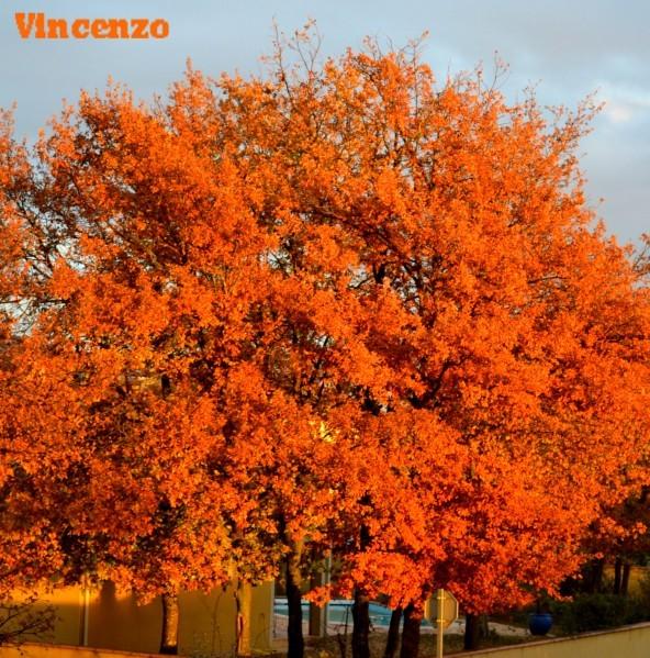 Decembre en orange