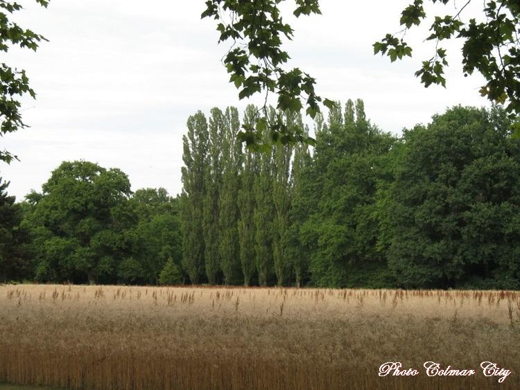 Parc de Schoppenwihr (68) : Baron et jardinier