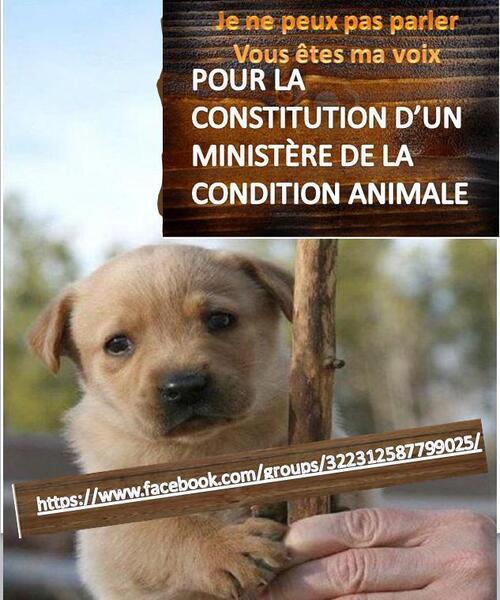 souffances Animale et conscience de l'humain