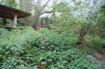 Zoo Osnabruck d50 2012 033