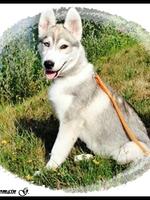 Leska (3,5 mois)