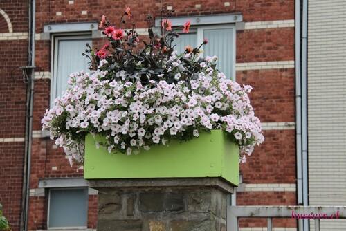 fleurs de l'école horticole