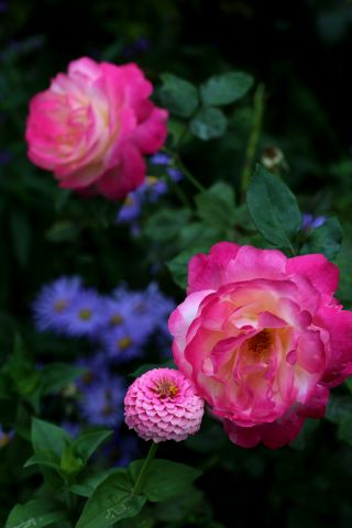 Les Roses de Warren : Colour Buffet