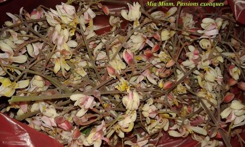 Fleurs brèdes mouroum frites