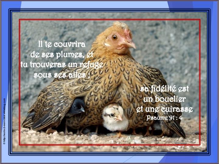 Il te couvrira de ses plumes - Psaumes 91 : 4
