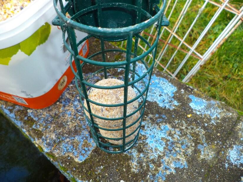 Balades et les oiseaux au jardin