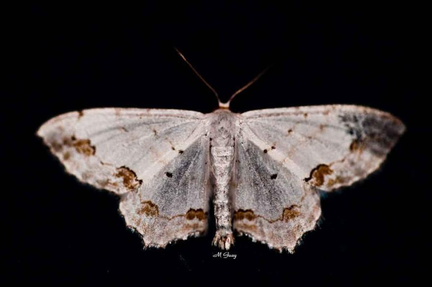 papillon-blanc-8820.jpg