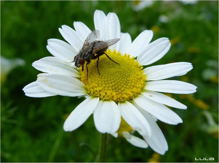 Quelques insectes (#2)
