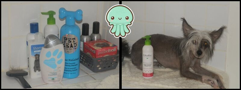 Test# Shampooing Khara - Usage fréquent