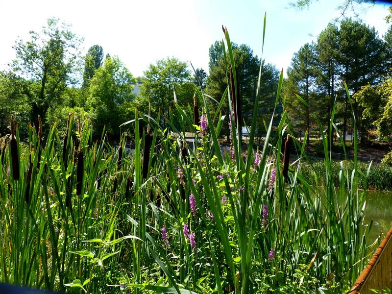 Le Jardin Jean-Marie Pelt à Villers -Les-Nancy /2