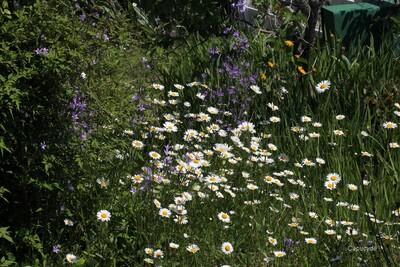 Scènes de jardin en mai...