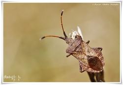 Documents et liens d'aides pour identifications de la faune et de la flore