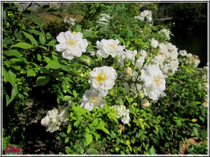 Fleurs de fin d'été 2013