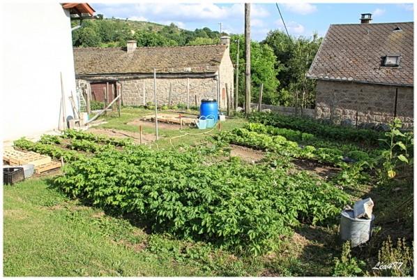 Jardin-2210-jardin-fin-juillet.jpg