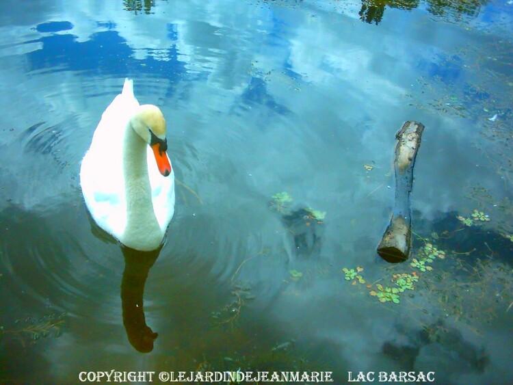 le lac de Barsac (Gironde)