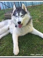 Laïcko (17 mois)