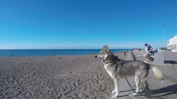 Fritz en vacances dans le sud