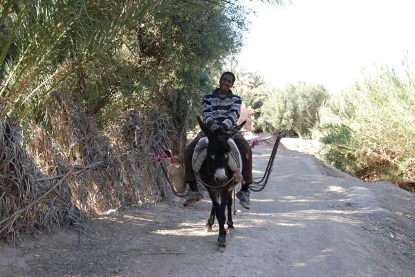 Un oasien et son âne