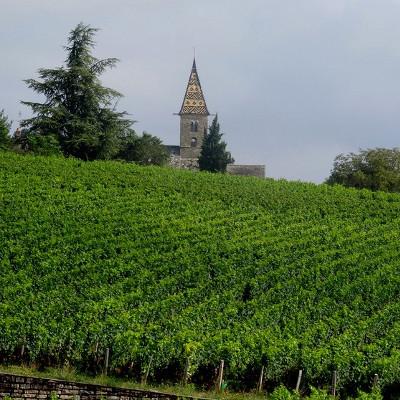 régions de vignobles, mais pas seulement. cependant, la visite d'une production