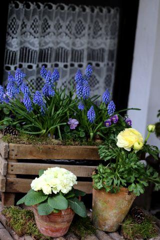 Cageot de printemps