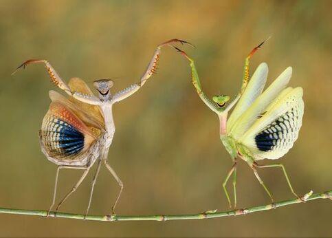 IMAGE : Et on lève les bras bien haut !