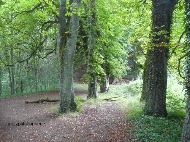"""""""Promenons-nous dans les bois...."""""""