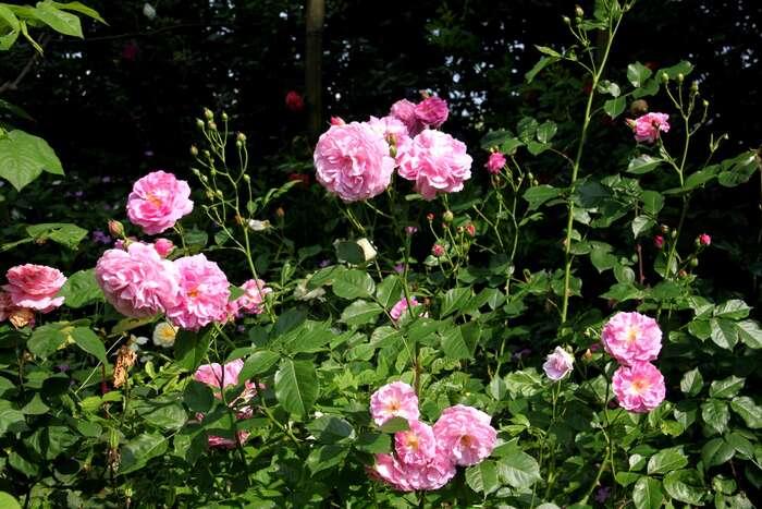 Le Jardin du Tournay-Vous (3-7)