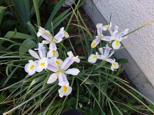 suite de fleures chez bernadette