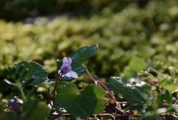 Fleurs-13-2348.jpg