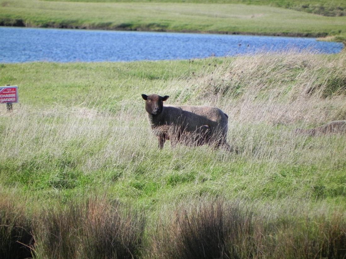 des animaux du marais Vendéens
