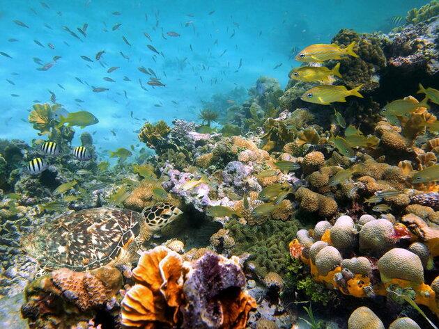 Paradis sous l'eau
