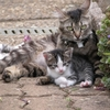 chatons-autres-animaux-autres-chats-metz-france-1155359149-934828.jpg