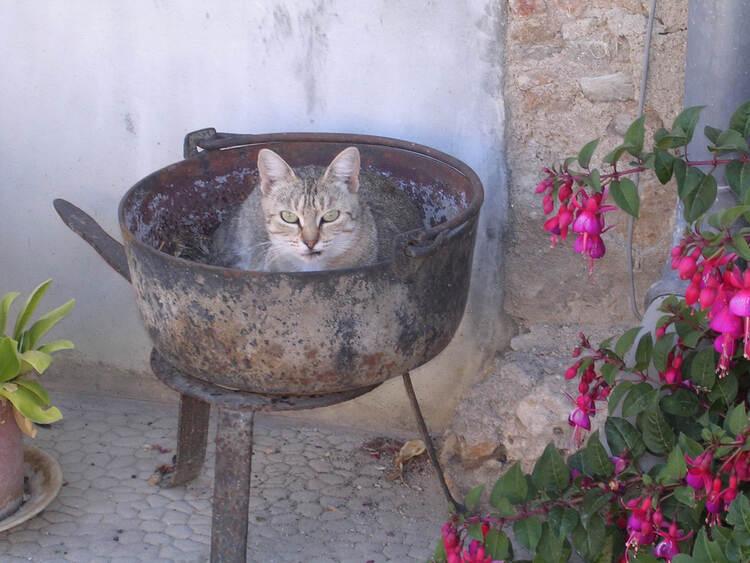 Le chat dans le chaudron  (A & A et Cie n° 67)