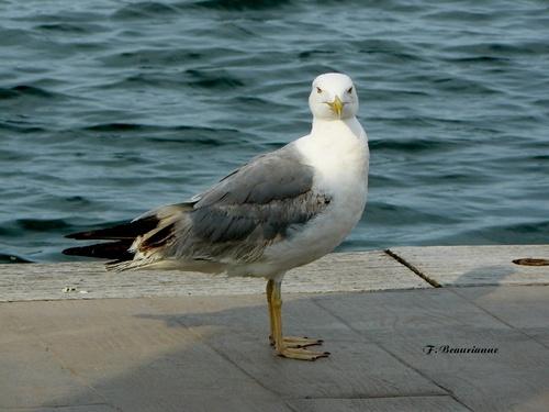 Galerie - Oiseaux du littoral
