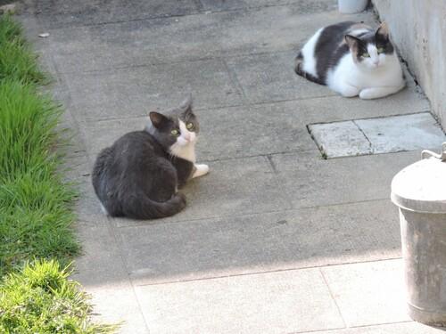 La chatte d'à côté .
