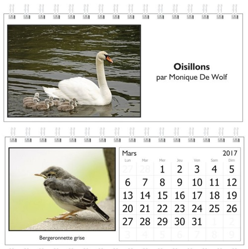 Calendrier 2017 : oisillons