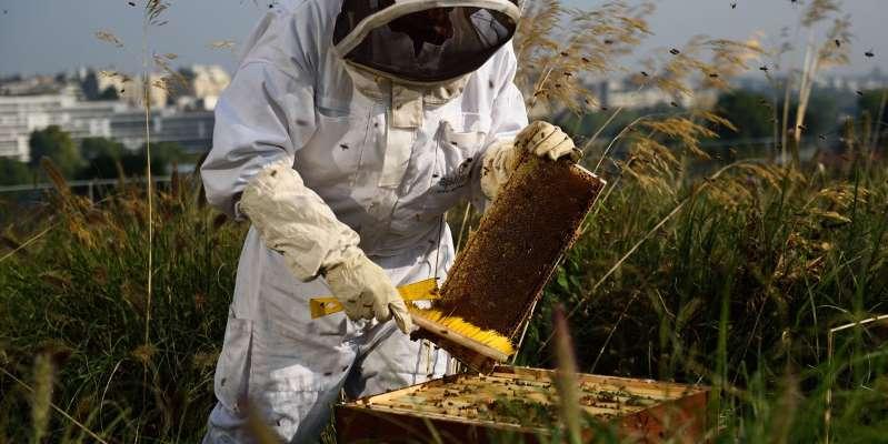 Du glyphosate dans le miel : des apiculteurs portent plainte contre Monsanto
