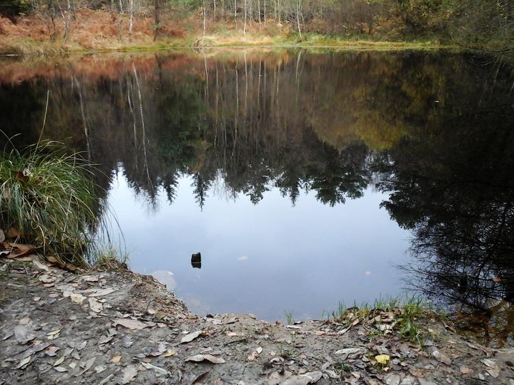 Balade en forêt de Camors (Morbihan)
